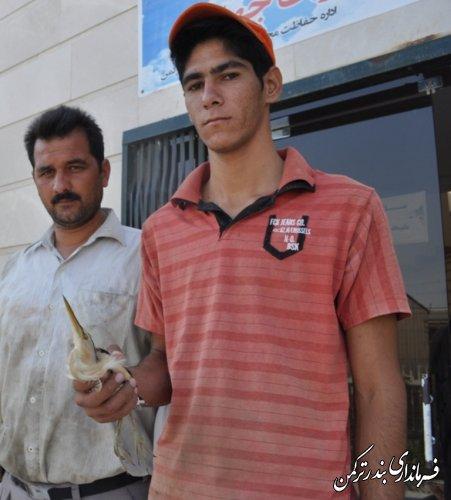 تحویل دو قطعه پرنده  مصدو م به محیط زیست شهرستان ترکمن