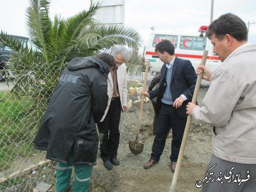 کاشت نهال در اسکله بندرترکمن توسط فرماندار
