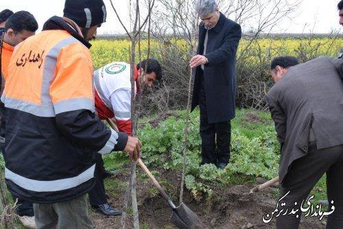 درختکاری مسیر ورودی شهر بندرترکمن از بندرگز