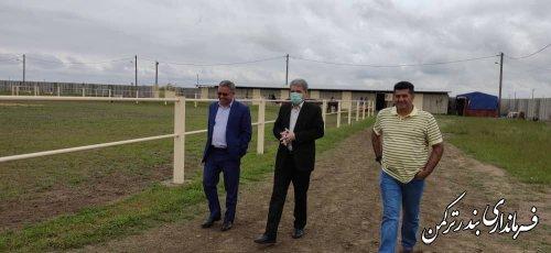 بازدید فرماندار شهرستان بندرترکمن از پروژه گردشگری مزرعه پرورش اسب